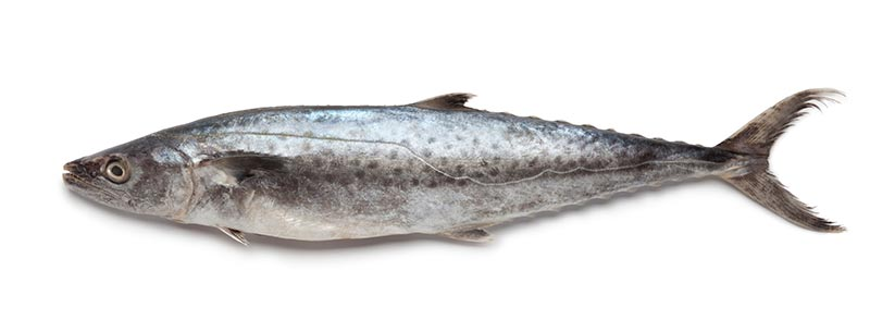 Mackerel-king